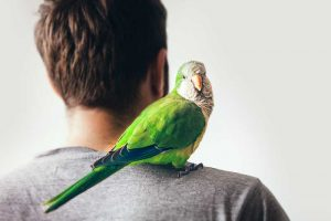hypoallergenic birds