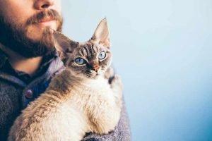 devon rex hypoallergenic cats