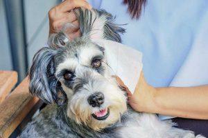 hypoallergenic dog wipes