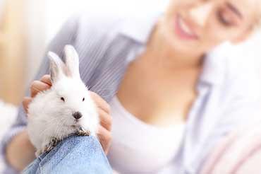 Hypoallergenic Bunny