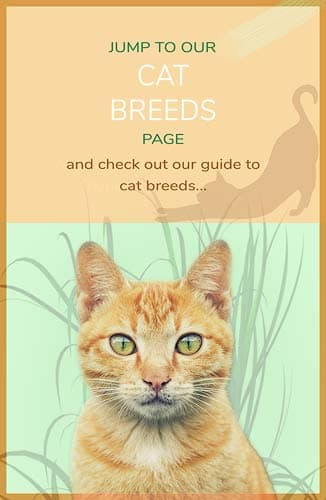 Jump to Cat Breeds page