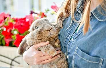 Rabbit Allergies